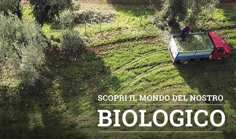 Il Biologico secondo Olio Clemente